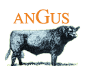 Angus breed, own stockbreeding